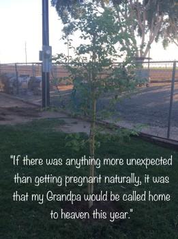 Grandpa's tree